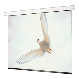 Targa Electric Wall Projection Screen