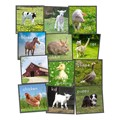 Barn Animals Carpet Squares - Set of 24