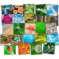 Nature's Beauty Carpet Squares - Set of 24